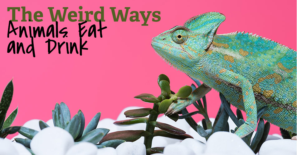 The Weird Ways Animals Eat and Drink